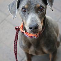 Adopt A Pet :: Randy - Fillmore, CA