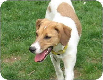 Hound (Unknown Type) Mix Dog for adoption in Blairstown, New Jersey - Lola - Adopted!