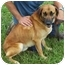 Photo 1 - Shepherd (Unknown Type) Mix Dog for adoption in Somerset, Pennsylvania - Troy