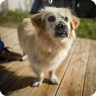 Terrier (Unknown Type, Small)/Basset Hound Mix Dog for adoption in Winston-Salem, North Carolina - Bert