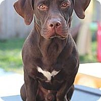 Adopt A Pet :: Yogi - Kingwood, TX