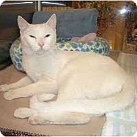 Adopt A Pet :: Johhny - Scottsdale, AZ