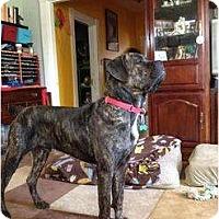 Adopt A Pet :: Barkley - Richmond, VA