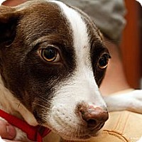 Adopt A Pet :: Fantastic Fannie - Brooklyn, NY