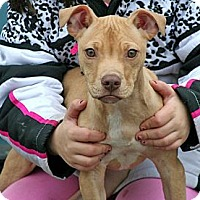 Adopt A Pet :: Righty - Spring City, PA