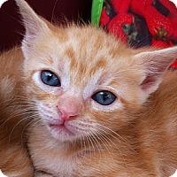 Adopt A Pet :: Peggy - Brooklyn, NY