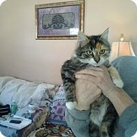 Adopt A Pet :: Calico - Chesterfield, VA