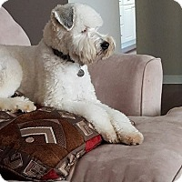 Adopt A Pet :: Chester(Pending ) - Northumberland, ON