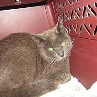 Adopt A Pet :: Tyler - Coos Bay, OR