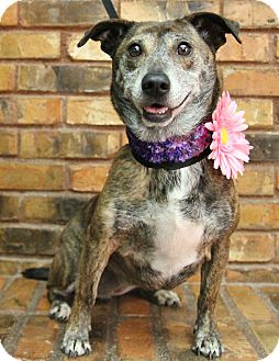Dachshund/Terrier (Unknown Type, Small) Mix Dog for adoption in Benbrook, Texas - Nay Nay
