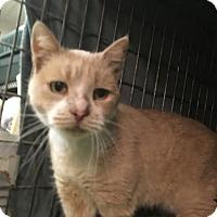 Adopt A Pet :: Betsy - East Brunswick, NJ