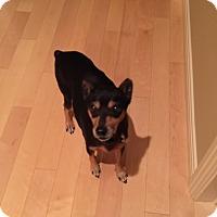 Adopt A Pet :: Dahlia - Oceanside, CA