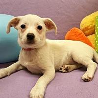 Adopt A Pet :: Em - Modesto, CA