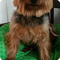Adopt A Pet :: Riley - Crump, TN