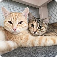 Adopt A Pet :: Morgan - Prescott, AZ