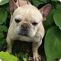 Adopt A Pet :: Margo-ADOPTION PENDING - Bridgeton, MO