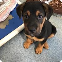 Adopt A Pet :: Field 109195 - Joplin, MO
