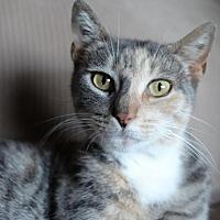 Adopt A Pet :: Kiana - Brooklyn, NY