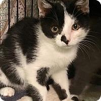 Adopt A Pet :: Mimi - East Brunswick, NJ