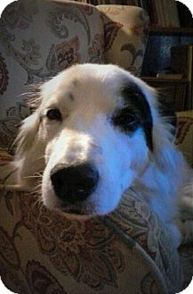 "Border Collie/Australian Shepherd Mix Dog for adoption in Minerva, Ohio - Grace""Adoption Pending"""