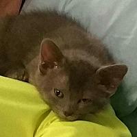 Adopt A Pet :: Gracie - Ypsilanti, MI