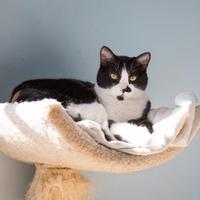 Adopt A Pet :: Booger - Thomasville, GA