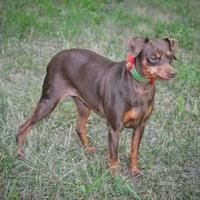 Adopt A Pet :: Tasha - Jefferson, IA