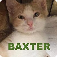 Adopt A Pet :: 4Baxter - Delmont, PA
