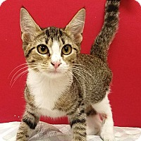 Adopt A Pet :: Becca - Decatur, AL