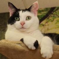 Adopt A Pet :: Ebony - St. Catharines, ON