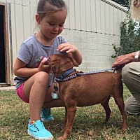 Adopt A Pet :: Rusty RH CP - Providence, RI