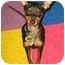 Photo 1 - Miniature Pinscher Puppy for adoption in Syracuse, New York - Buzz