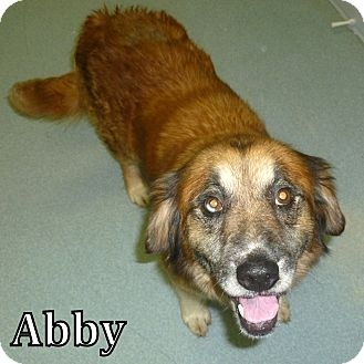 Shepherd (Unknown Type) Mix Dog for adoption in Georgetown, South Carolina - Abby