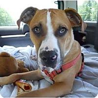 Adopt A Pet :: Duke - Conyers, GA