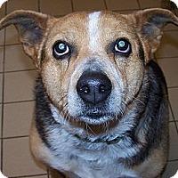 Adopt A Pet :: Sally - Jackson, MI