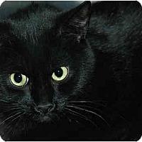 Adopt A Pet :: Nala Belle - Warminster, PA