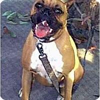 Adopt A Pet :: FRIEDA - dewey, AZ