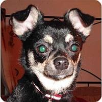 Adopt A Pet :: Quita - Rigaud, QC