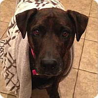 Adopt A Pet :: Leona - Scottsdale, AZ