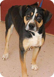 Hound (Unknown Type) Mix Dog for adoption in McDonough, Georgia - Gatsby
