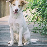 Border Collie Mix Dog for adoption in Webster, Texas - Haven