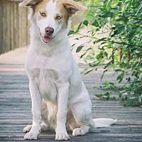 Adopt A Pet :: Haven - Webster, TX