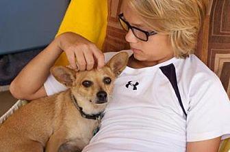 Chihuahua Mix Dog for adoption in Scottsdale, Arizona - Corky