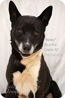 Akita Mix Dog for adoption in Newnan City, Georgia - Monty