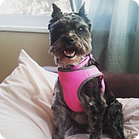 Adopt A Pet :: Gucci - Ft. Collins, CO