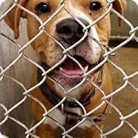 Adopt A Pet :: Copper - ADOPTED! - Zanesville, OH