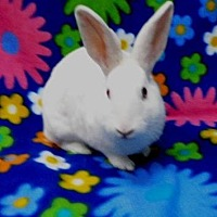 Other/Unknown for adoption in Scotts Valley, California - Hilton