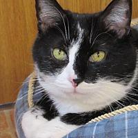 Adopt A Pet :: Brady - Hartville, WY