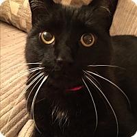 Adopt A Pet :: Neo - Burlington, ON