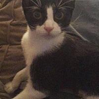 Adopt A Pet :: Tabitha - Highland, IN